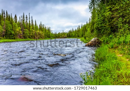 Forest river water scene view. River in forest