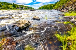 Forest river water stones view