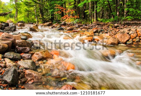 Forest river waterfall view. Wild river rapids. Forest wild river water flow. River stream water view