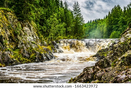 Forest river wild flow view. Mountain forest river wild
