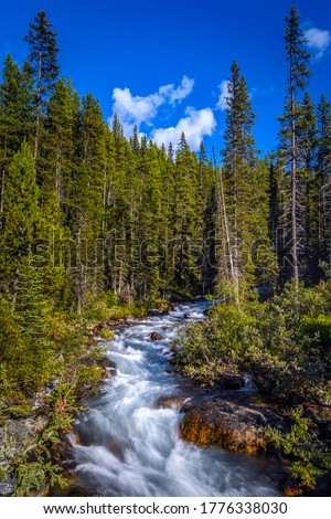 Forest river wild in mountains. Forest river rapid. River wild in forest
