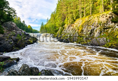 Forest river wild in mountains. Mountain forest river wild flow. River wild in mountain forest