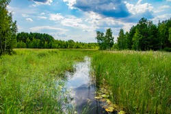 Forest river with a reflection of the sky in the water. Natural landscape. Background.
