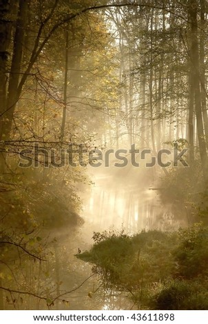 Forest river with mist floating over the water in the early morning.