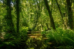 Forest river with tropical vegetation
