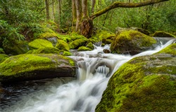 Forest river  with waterfall in rapid view. Mossy rocks waterfall river stream. River waterfall in mossy forest