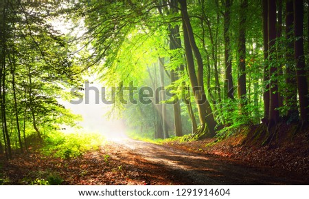 Forest road in a green foggy forest with sun rays in background. Osnabruck, Germany #1291914604