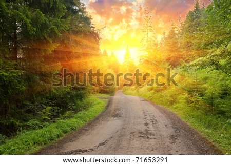 forest road in a rays of sun