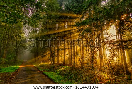 Forest road in autumn sunbeams. Forest road sunbeams. Sunbeams forest in autumn. Sunbeams forest road view