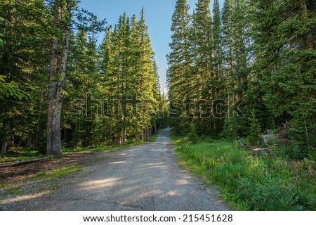 Forest Road in Colorado Summit County. Pine Forest Road.