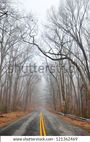 forest road in fog - winter season with dramatic leafless tree branches - stock photo