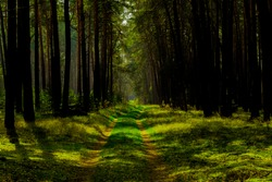 Forest road in spring with sunlight and shadows