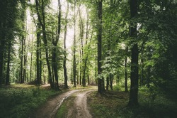 forest road in summer