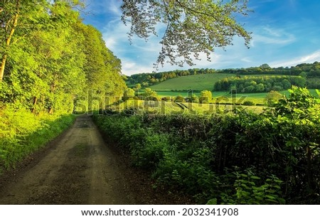 Forest road in the bosom of nature. Summer green forest road landscape. Forest road landscape. Road in summer forest