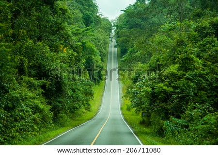 forest road in the deep forest
