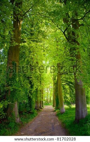 Forest Road in the summer. Summer Landscape.