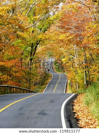 forest road, New England