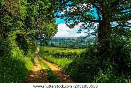 Forest road on a summer day. Trail in forest. Forest trail. From forest trail