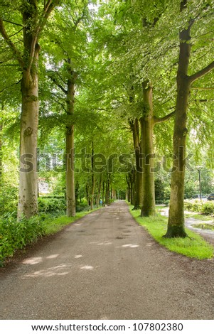 Forest road through protected area in Beetsterzwaag, Netherlands