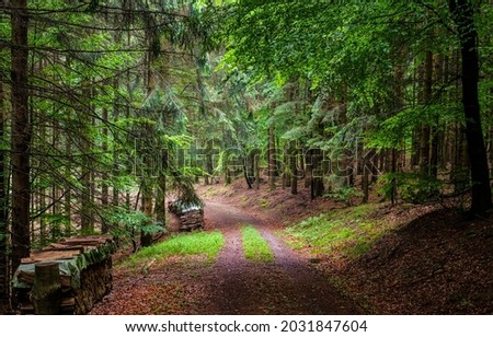 Forest road to the sawmill. Forest road view. Road in forest. Deep forest road