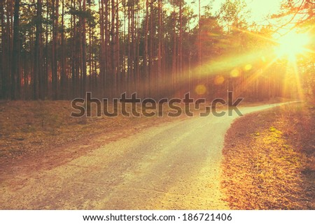 Forest road under sunset sunbeams. Lane running through the autumn deciduous forest at dawn or sunrise.