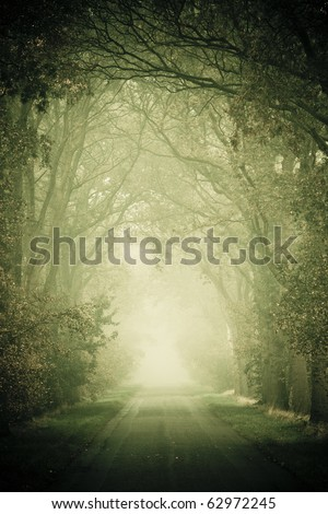 Forest road with fog in autumn