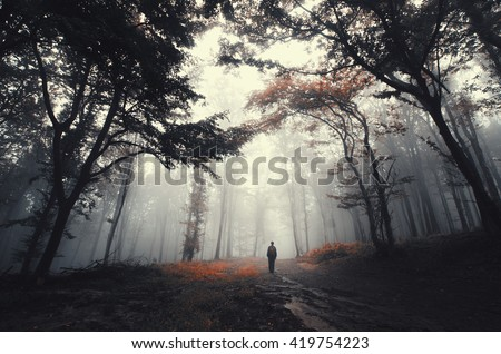forest road with man