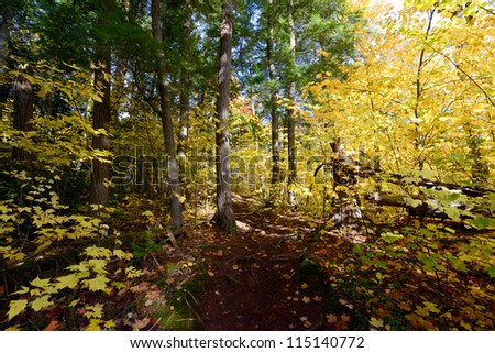 Forest scenery in autumn at Algonquin Park, Ontario, Canada