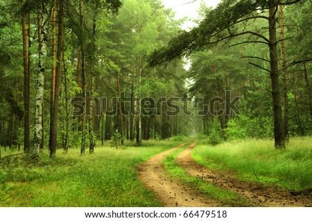 forest scenery near Berlin, Germany