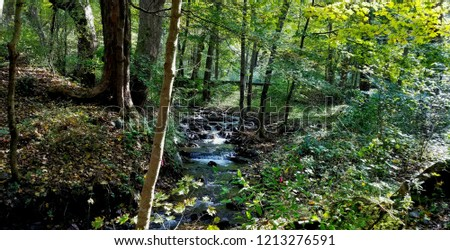 Forest Setting with a Babbling Brook, Sunlit from the One Side; Save the Environment