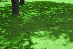 Forest  Shaded Glade Background Texture. Rolled Lawn. Country Garden Or Park Green Bright Grass. Background With Trees Shadow. Picnic Family Place On Grass Or Resting Area. Focus Selective.