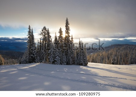 Forest skiing country in British Columbia, Canada