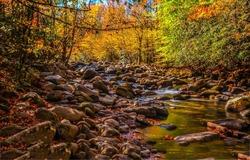 Forest stream in autumn landscape. Autumn forest creek. Autumnal background. Autumn forest stream