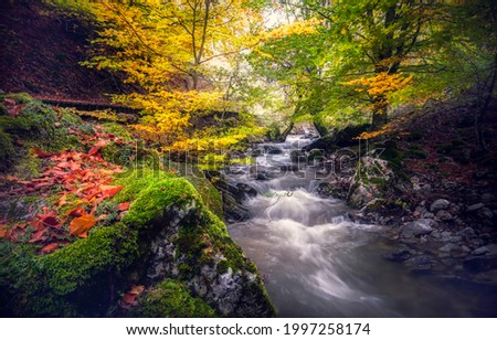 Forest stream in the autumn forest. Autumn forest stream view. River stream in autumn forest. Autumn river stream in autumnal forrest Foto d'archivio ©