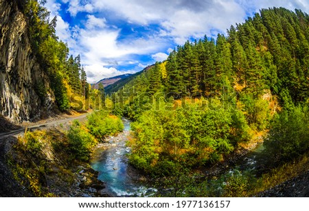 Forest stream in the mountains. Mountain forest stream view. River stream in mountain forest