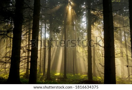 Forest sunbeams through trees view. Sunbeams forest. Sunrays in deep forest. Sunbeams forest trees