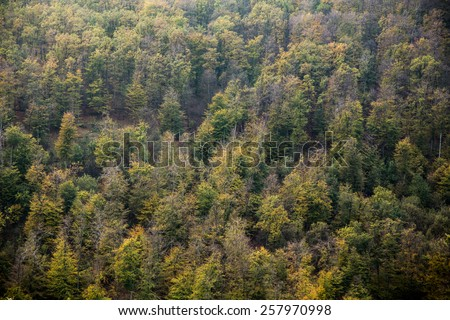 Forest texture