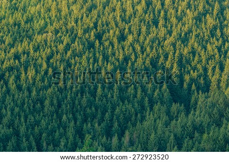 Forest texture of mountain slope.