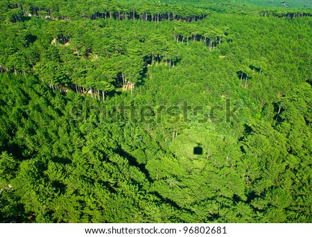 forest texture, tree tops