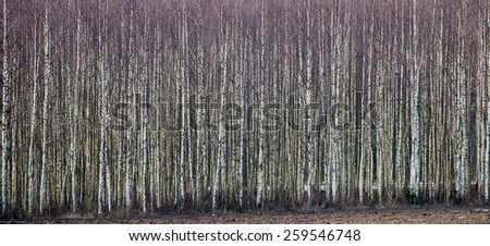 forest textured background of trees and land