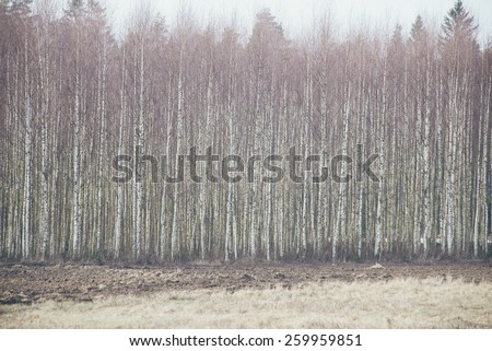forest textured background of trees and land - grainy retro vintage film effect