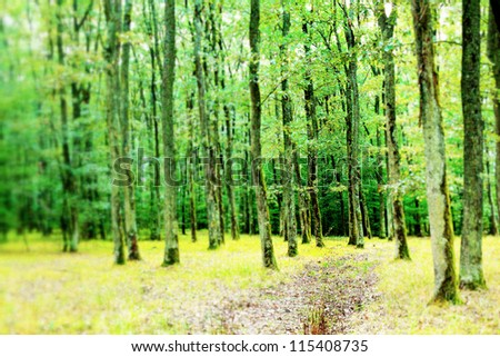 Forest. Tilt-shift view.