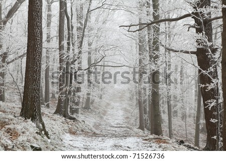 Forest trail among frosted beech trees in the winter morning.