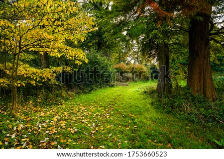 Forest trail in autumn season. Autumn forest trail view. Trail in autumn forest landscape. Autumn forest trail