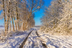 Forest trail in winter in Germany in the early morning shortly after sunrise , Agricultural land at the end of the road