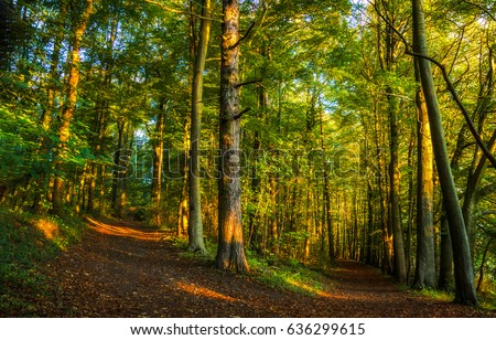 Forest trail landscape #636299615