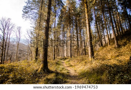 Forest trail on a sunny day. Pinewood trail. Trail in pine forest. Forest trail view