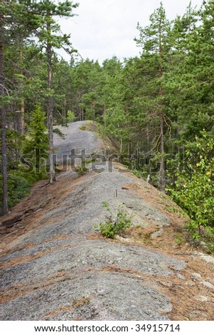 Forest trail on the bedrock cliff