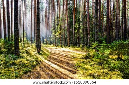 Forest trail sunlight shadows view. Sunlight shadows on forest trail. Deep forest trail sunlight view. Forest trail shadows sunlight