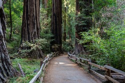 Forest trails amongst the redwoods at Muir Woods National Monument, California.